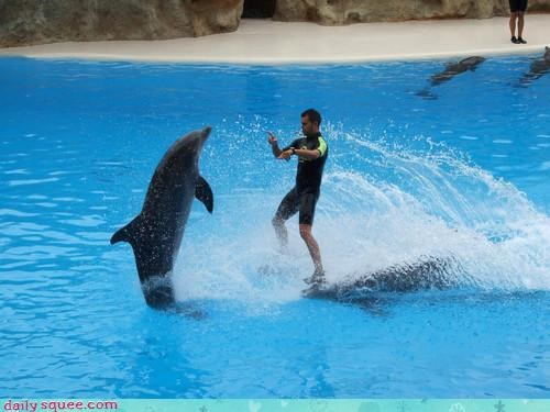 Acting Like Animals: Meanwhile, at the Dolphin Discotheque