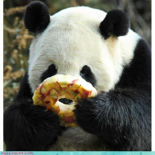 acting like animals,donut,examining,fruit,interested,interesting,intrigued,noms,panda,panda bear,popsicle,shape