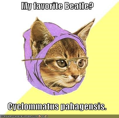 Hipster Kitty: Favorite Beatle