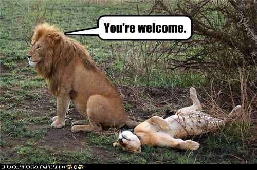 caption,captioned,hubris,I Can Has Cheezburger,innuendo,insinuation,lion,lioness,lions,sleeping,youre-welcome