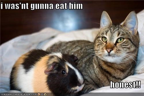 i was'nt gunna eat him  honest!!