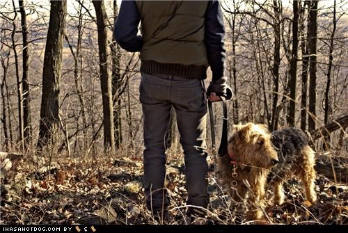add,airedale terrier,attention,attention span,distracted,do want,Forest,looking,outdoors,squirrel,themed goggie week,view,woods