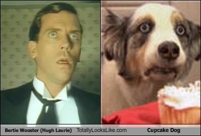 Bertie Wooster (Hugh Laurie) Totally Looks Like Cupcake Dog