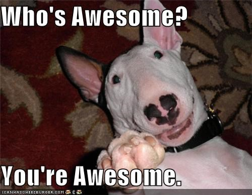 answer,awesome,bull terrier,compliment,Hall of Fame,happy,pointing,question,who,you
