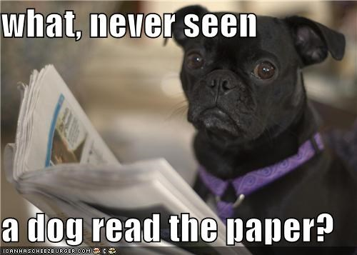 what, never seen  a dog read the paper?