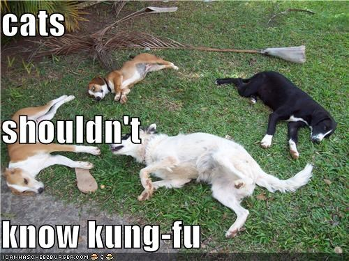 cats shouldn't know kung-fu