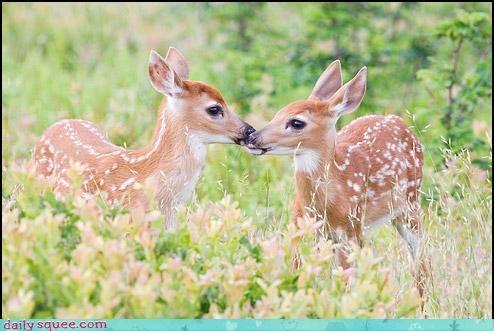 deer,Forest,KISS,meadow,nuzzle,sweet