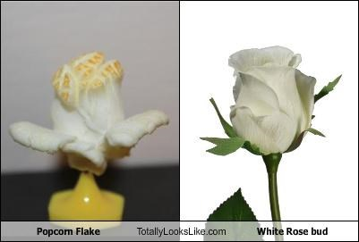 Popcorn Flake Totally Looks Like White Rose bud