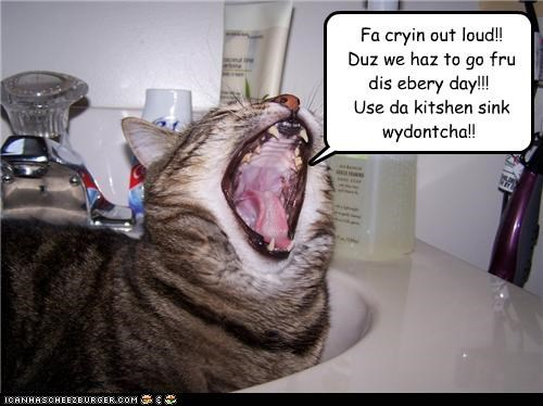 Fa cryin out loud!! Duz we haz to go fru dis ebery day!!! Use da kitshen sink wydontcha!!