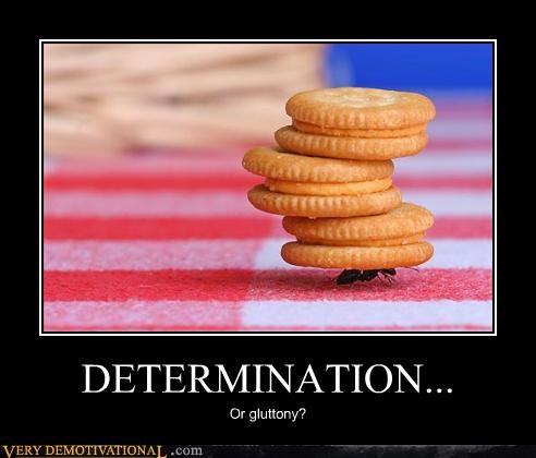 crackers,gluttony,determination,ant