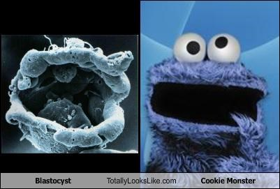 Blastocyst Totally Looks Like Cookie Monster