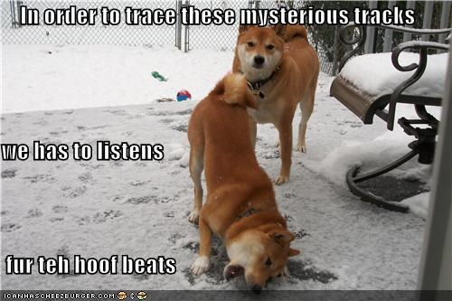 In order to trace these mysterious tracks we has to listens   fur teh hoof beats