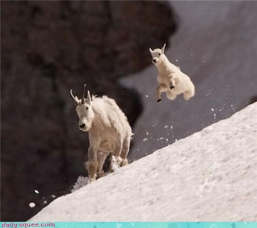 baby,bounce,goat,jump,mom,snow