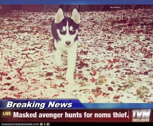 Breaking News - Masked avenger hunts for noms thief.