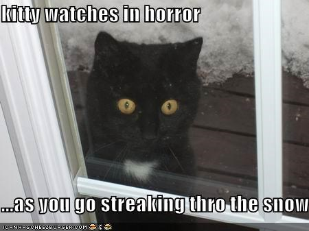 kitty watches in horror  ...as you go streaking thro the snow