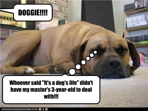 bull mastiff,bullmastiff,child,do not want,dogs,human,ignorance,irritated,its-a-dogs-life,life,saying,three year old,toddler,torture,upset