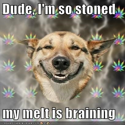 Dude, I'm so stoned  my melt is braining