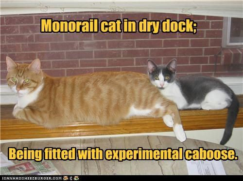 caboose,caption,captioned,cat,Cats,dock,dry,dry dock,experimental,fitted,kitten,monorail cat