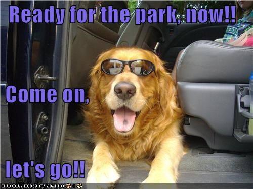 car,come on,dangling,encouraging,excited,golden retriever,lets go,now,park,ready,sunglasses,tongue,waiting