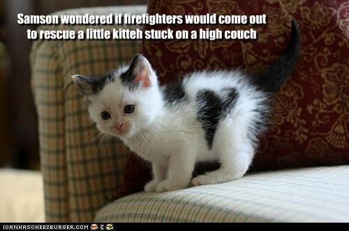 Samson wondered if firefighters would come outto rescue a little kitteh stuck on a high couch