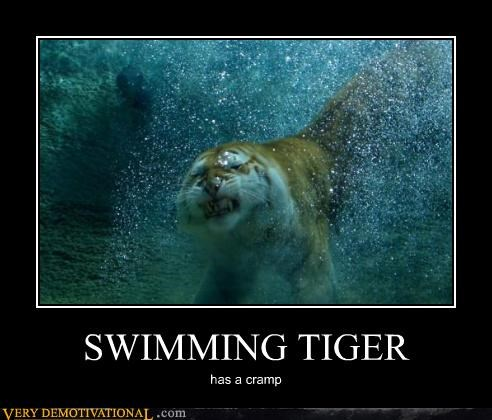 cramp,sad face,swimming,tiger