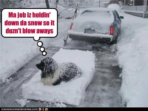 Ma job iz holdin' down da snow so it duzn't blow aways