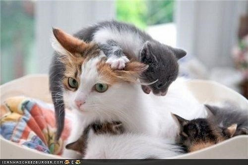 Cyoot Kittehs of teh Day: Aifink Momma Needz a Drink...