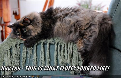 Hey Lee - THIS IS WHAT FLUFFY LOOKED LIKE!