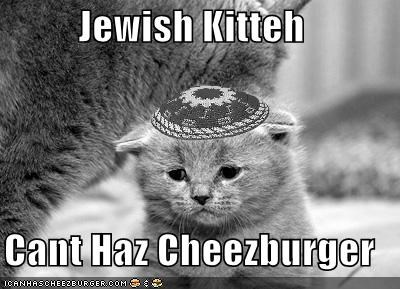 Jewish Kitteh  Cant Haz Cheezburger