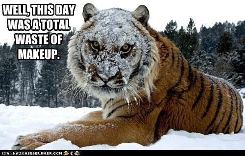 caption,captioned,disappointed,displeased,makeup,snow,tiger,upset,waste,wasteful