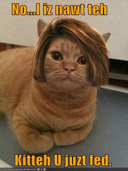 caption,captioned,cat,denial,disguise,do want,fed,hair,just,no,noms,not,wig