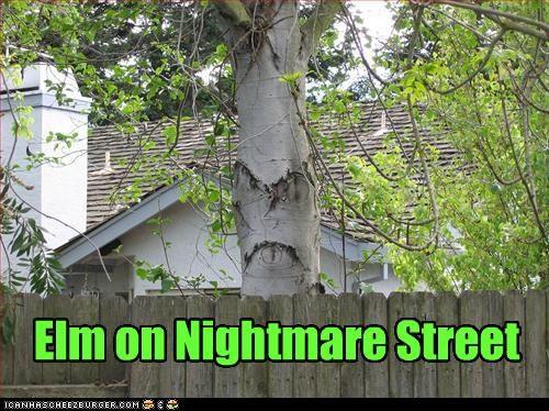 Elm on Nightmare Street