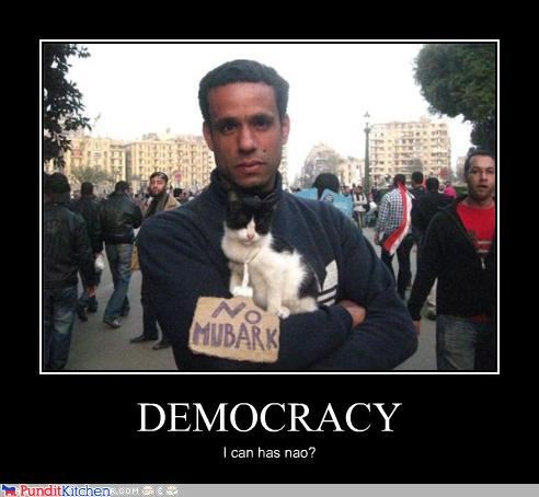 can has,Cats,democracy,egypt,lolcats,protests,riots,signs
