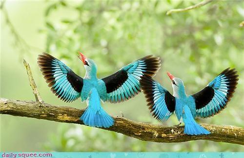 connection,evocation,have one on me,joanna newsom,kingfisher,kingfishers,lyric,lyrics,song,title,two