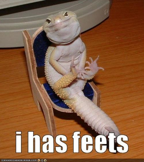 caption,captioned,chair,feet,feets,happy,lizard,sitting,smiling
