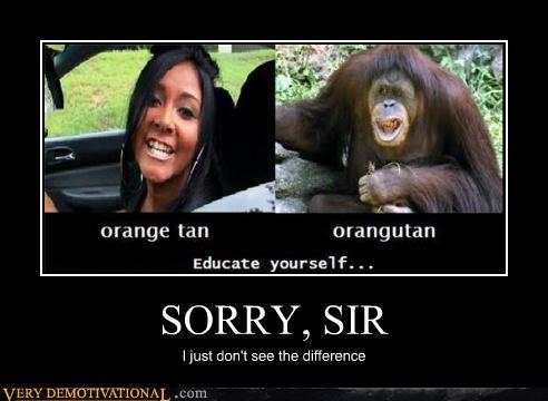 difference,orange,orangutan,Snookie,sorry,tan