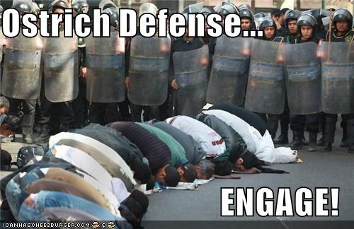 defense,egypt,ostrich,praying,protesters,protests,riot shields,riots