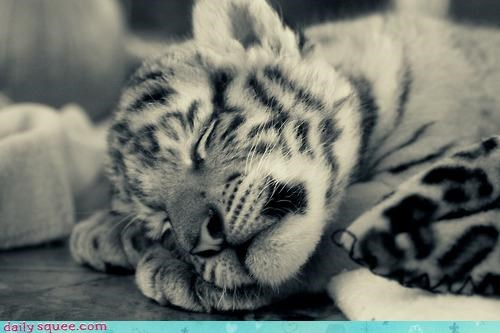 Sleepy Baby Tiger