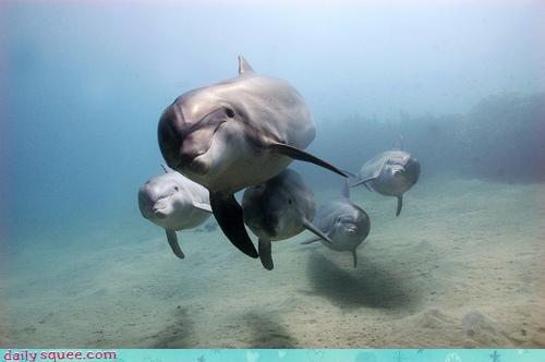 Acting Like Animals: Synchronized Dolphining