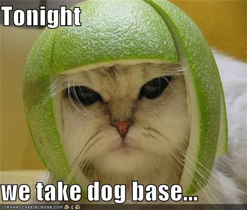 Tonight  we take dog base...