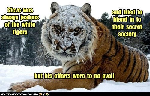 Steve  was always  jealous of  the  white tigers