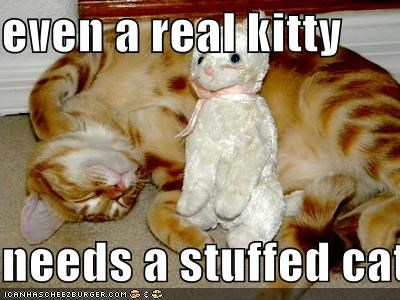 even a real kitty   needs a stuffed cat