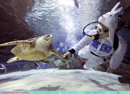 acting like animals,aquatic,costume,disguise,diver,dressed up,facade,hands,hare,holding,human,lie,suit,swimming,turtle