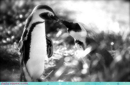 Acting Like Animals: Puckering Penguins!