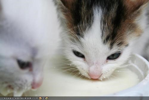 Cyoot Kittehs of teh Day: Milky Whiskers