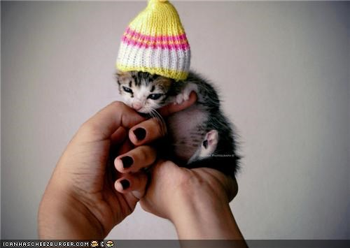 bite,cyoot kitteh of teh day,fingers,hands,hat,hold,knit,tiny,warm