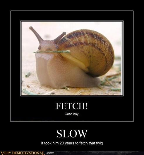 fetch,stick,slow,snail