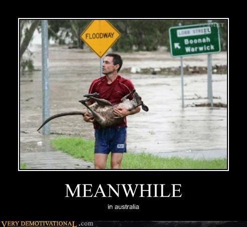 yikes,kangaroo,Meanwhile,floodway