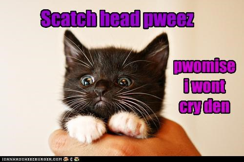 Scatch head pweez