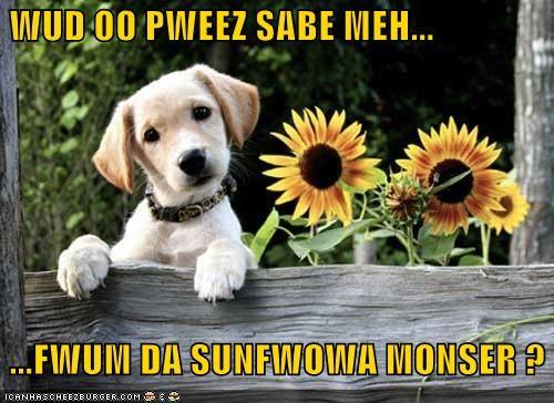 WUD OO PWEEZ SABE MEH...   ...FWUM DA SUNFWOWA MONSER ?